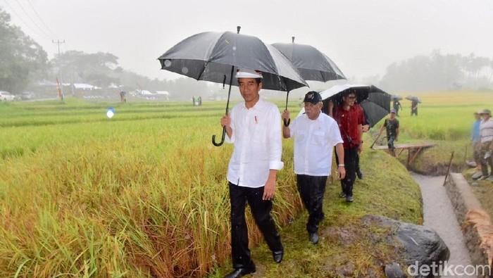 Foto: Presiden Jokowi hujan-hujanan menemui warga dan pekerja irigasi di Solok, Sumbar. (Agus Suparto/Fotografer Istana Kepresidenan)