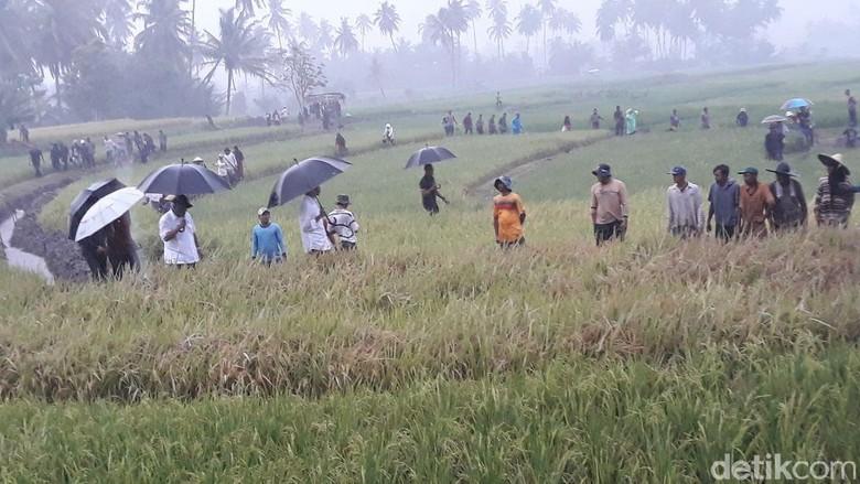 Jokowi Basah Kuyup di Tengah Sawah, Ada Apa?