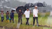 Jokowi Akan Hadiri Peringatan Hari Pers Nasional di Padang
