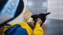 Tuei Tuei-Tie Hsiung, Anjing di Balik Pencarian Korban Gempa Taiwan