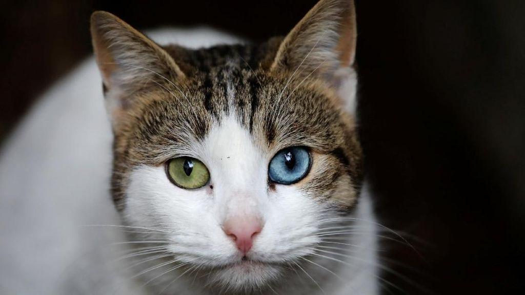 Foto: Istanbul, Kota Kucing Liar