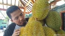Ayo ke Trenggalek, Saatnya Berburu Durian!