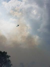Penampakan Kebakaran Hutan di Riau, Tim Berjibaku Padamkan Api
