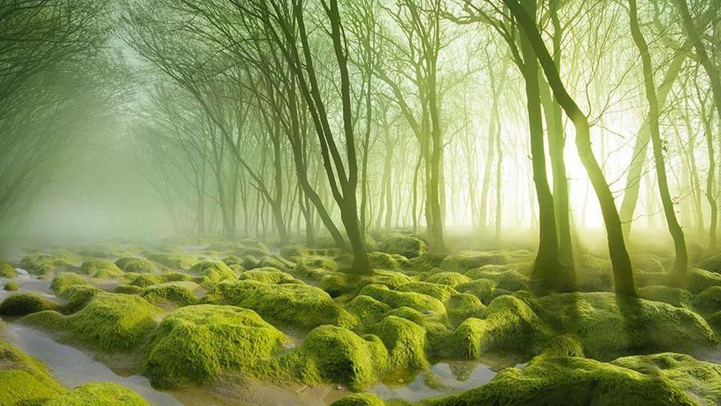 Tersihir Potret Keindahan Hutan yang Misterius