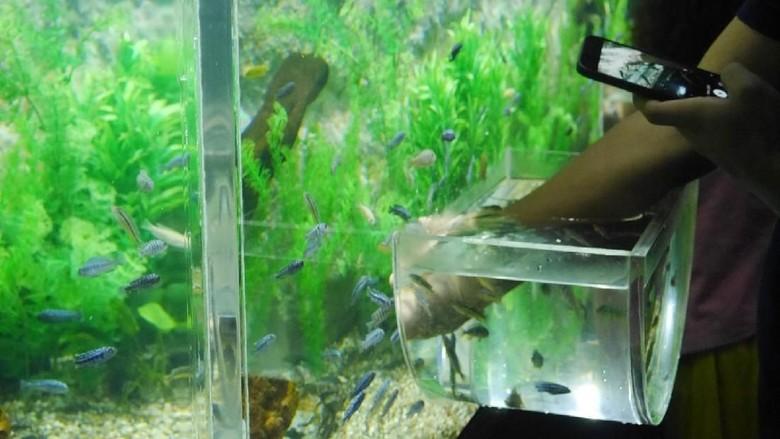Interactive Aquarium Seaworld (Kurnia/detikTravel)