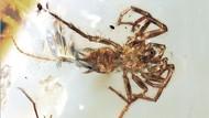 Fosil 100 Juta Tahun Ungkap Kerangka Laba-laba Berekor