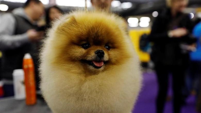 Perlombaan anjing di New York (REUTERS/Shannon Stapleton)