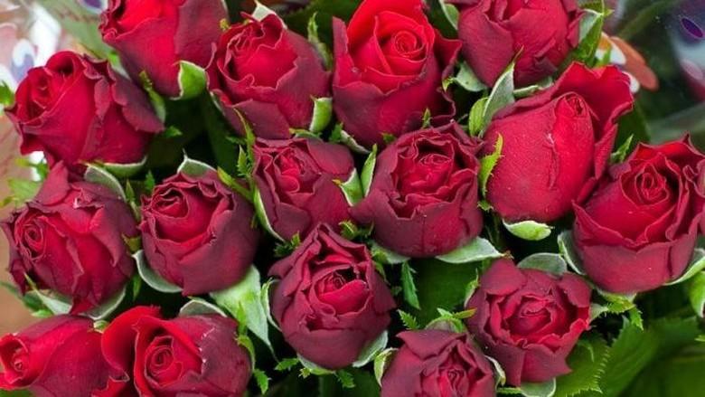 Asal-Muasal Bunga Mawar Hari Valentine di Australia