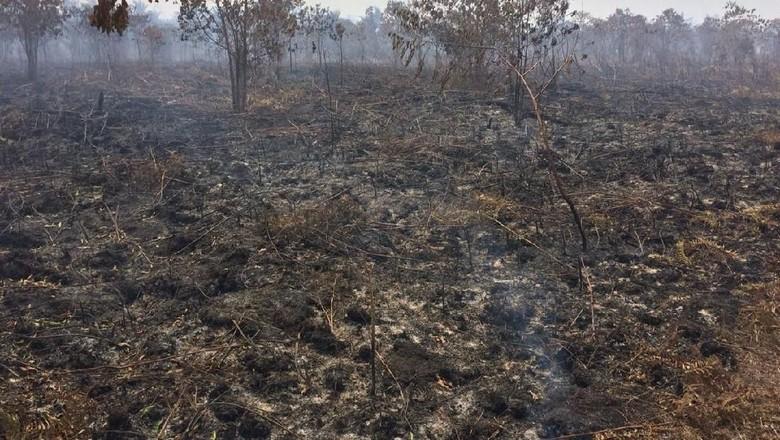 Polisi: Lahan Terbakar di Kabupaten Meranti Riau 135 Hektare