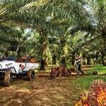 Mobil Ndeso Diminati Konsumen dari Malaysia dan Afrika