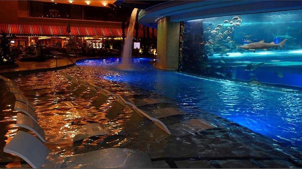 Foto: Berenang dan Bermain Perosotan Bersama Hiu