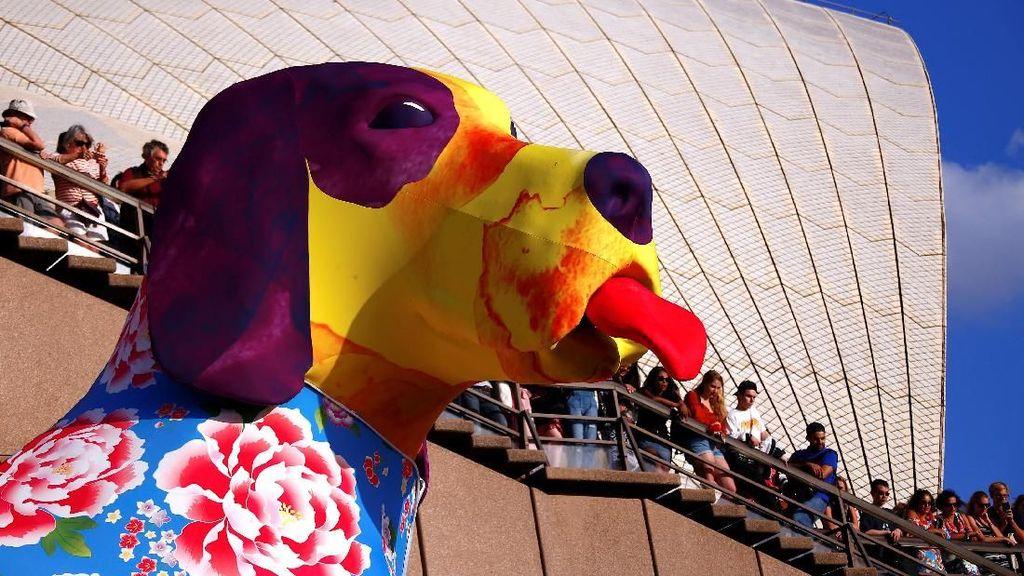 Foto: Lampion Anjing Raksasa Saat Imlek di Sydney