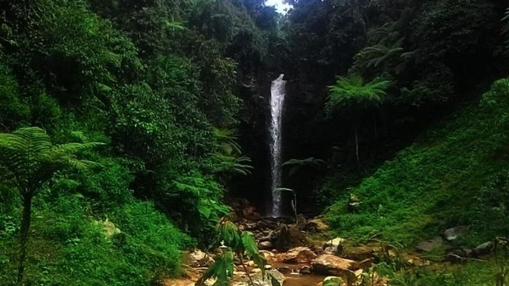 Curug Sentral, Air Terjun Cantik di Perkebunan Teh