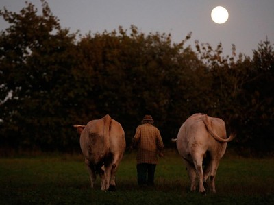 Foto: Pertanian Tanpa Teknologi di Prancis
