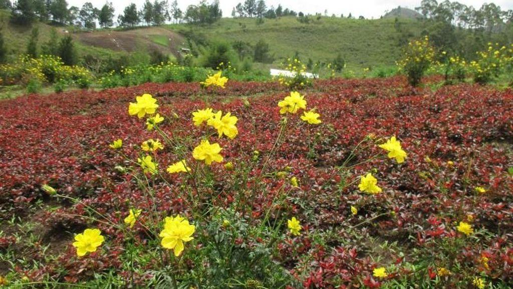 Akhir Pekan, Yuk Lepas Penat di Taman Bunga Sapo Juma