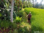 Ini Lokasi Ditemukannya Bocah yang Dibiarkan Telantar di Sukabumi