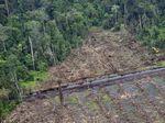 Ilmuwan Indonesia dan Jerman Ciptakan Terobosan Pemetaan Gambut