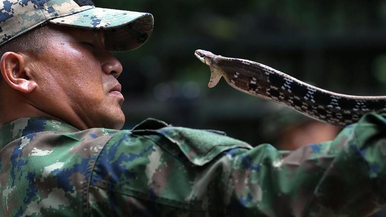 Potret Latihan Ekstrem Militer AS-Thailand Taklukkan Ular Kobra