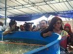 Menteri Susi Minta Warga Sleman Makan Ikan, Bukan Iwak Tempe