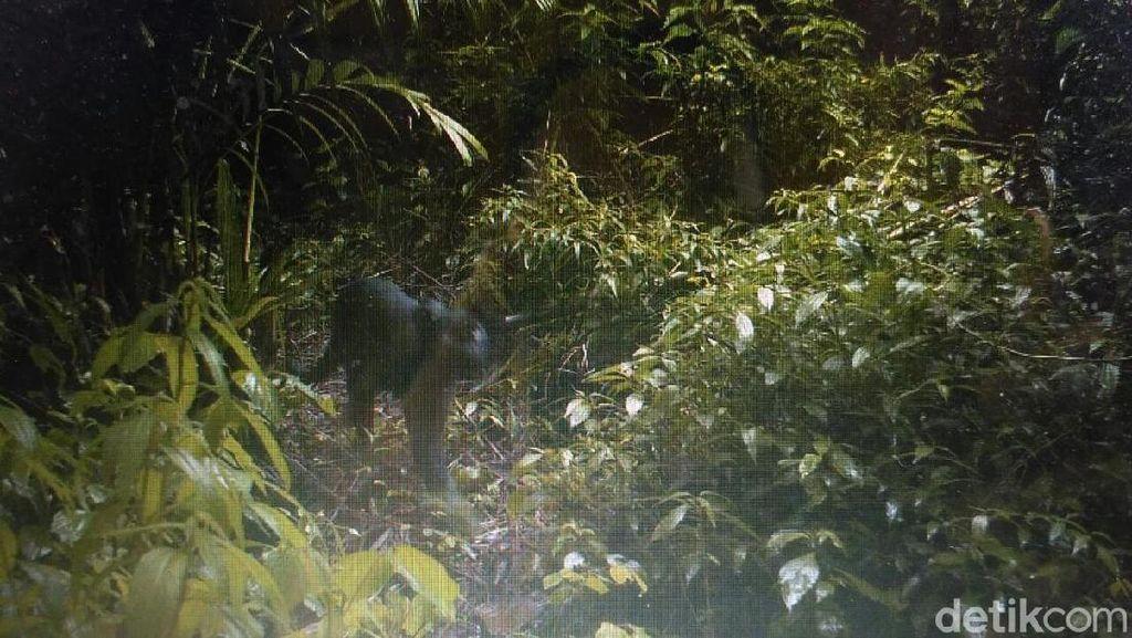 Perjumpaan Sesaat Petugas Taman Nasional Semeru dan Black Panther
