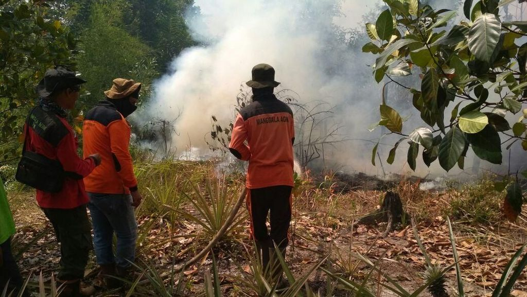 Sumsel, Riau, Kalbar, dan Kalteng Siaga Darurat Karhutla