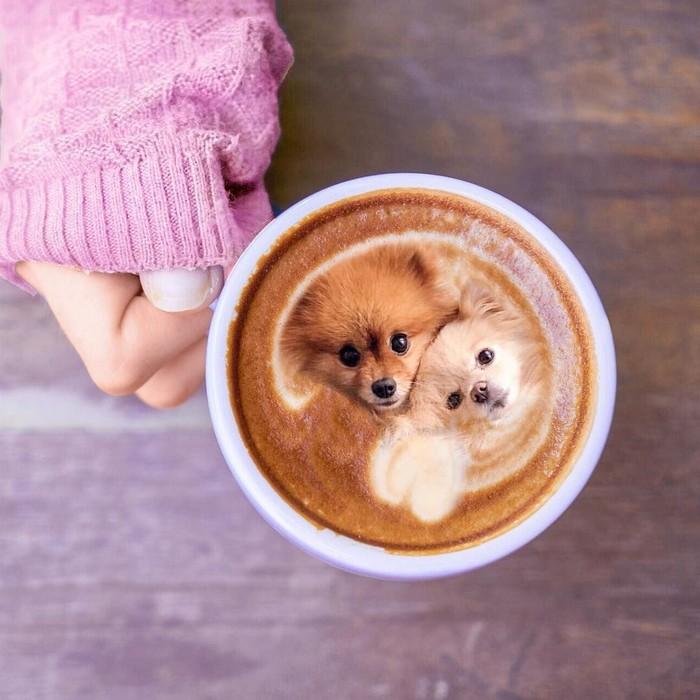 Pup-presso ini disebut sebagai pengganti caramel macchiato, tapi banyak yang lebih setuju bahwa minuman ini disebut Pupperchino Foto: Instagram/ @dogs_infood