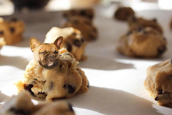 Seekor French Bulldog yang berpose tersenyum di dalam adonan cookie ini terlihat sangat menggemaskan, ya! Foto: Instagram/ @dogs_infood
