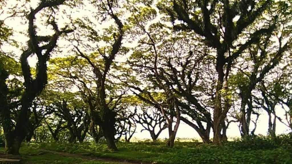 Hutan Lord of The Ring Ada di Banyuwangi