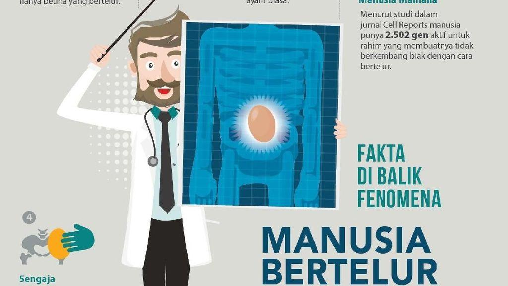 Infografis: Fakta-fakta di Balik Fenomena Manusia Bertelur