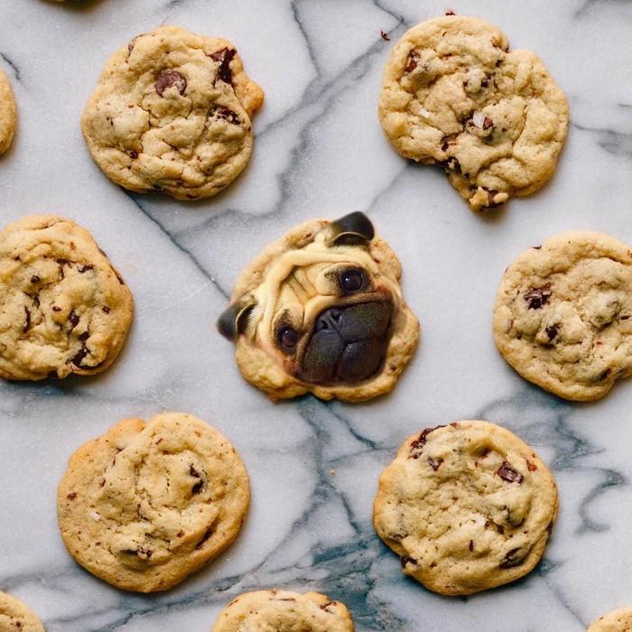 Lucunya! Cookies chocolate hangat ini berisikan seorang Pug dengan tatapan matanya yang manis. Foto: Instagram/ @dogs_infood