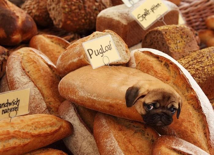 Diberi nama pugloaf, banyak netizen yang memberikan komentar bahwa roti ini merupakan saingan dari baguette. Foto: Instagram/ @dogs_infood