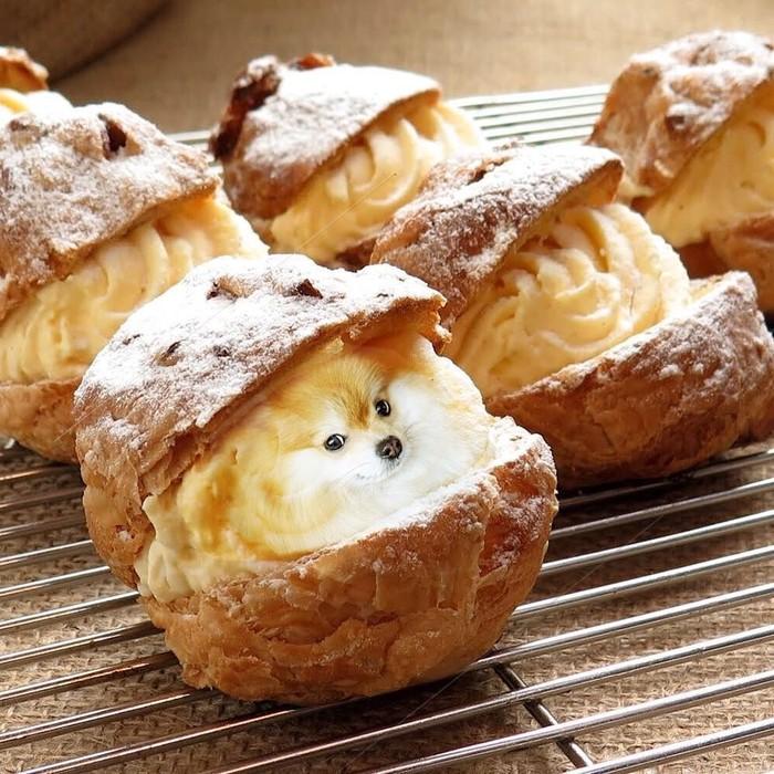 Siapa yang suka cream puff? Cream puff ini bersisi Pomeranian yang menjadi isian cream, dengan lirikan menggemaskan. Foto: Instagram/ @dogs_infood