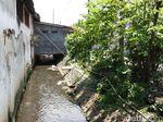 Di Sungai Ini, Warga Kepung dan Tangkap Ular Sanca Jumbo