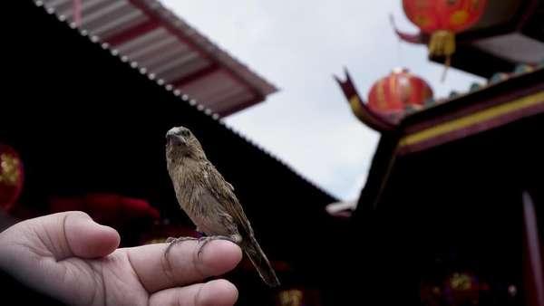 Fangsheng 放生 - Tradisi Melepaskan Binatang