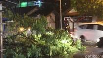 Hujan Angin di Garut, Pohon Tumbang Timpa Kabel Listrik dan Jalan