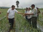 Banyuwangi Tanam Bawang Putih, Lahan 145 Hektare Disiapkan