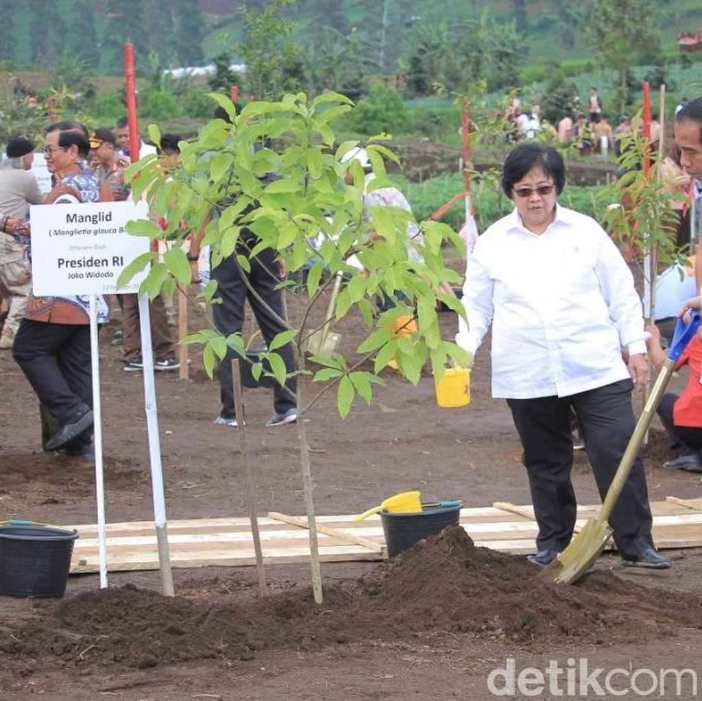 Selamatkan Citarum, Jokowi Tanam Pohon Manglid di Cisanti