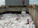 Beras Impor Dari Vietnam Tiba di Pelabuhan Tanjungwangi