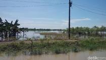 BPBD Demak: 300 Hektar Lahan Pertanian di Desa Sayung Terendam Banjir