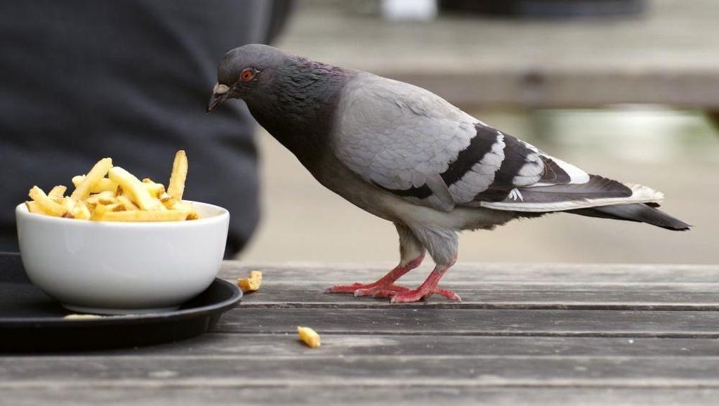 Wah, Balita Ini Berani Ambil Kembali Makanan dari Burung yang Mencurinya!