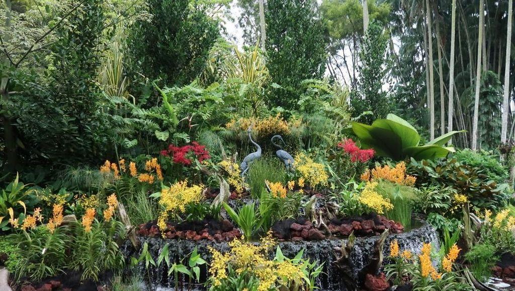 Taman Anggrek Terbesar di Dunia Ada di Singapura