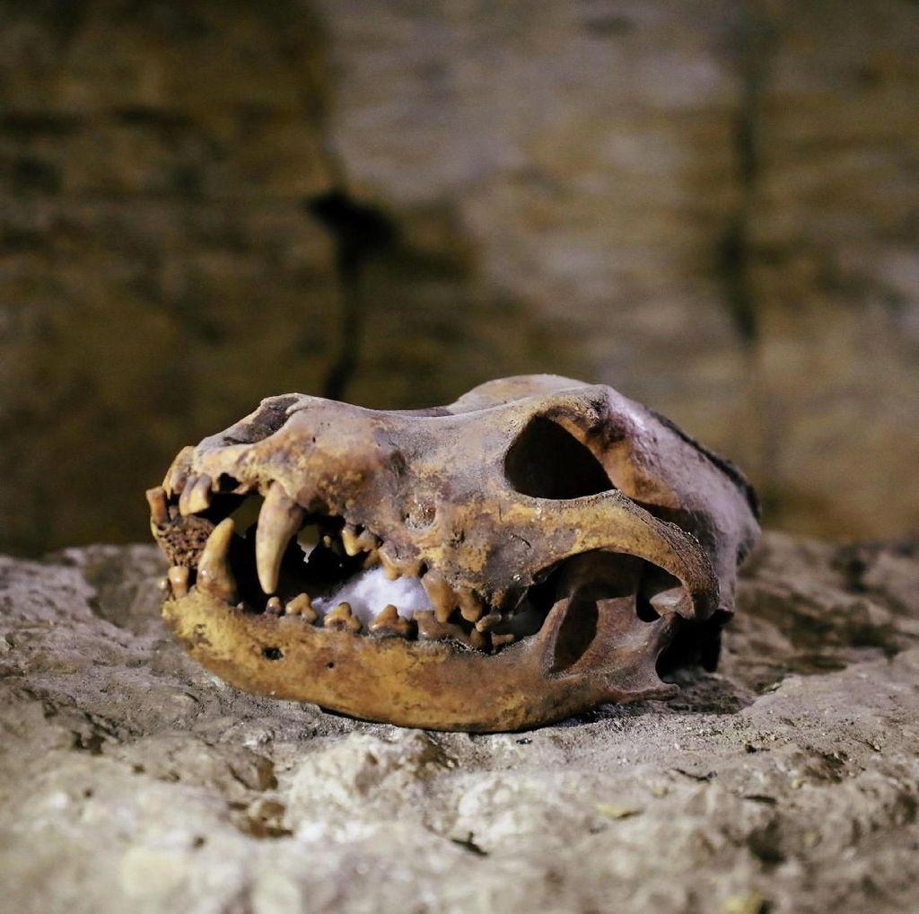 Penemuan Baru di Makam Kuno Mesir: Tengkorak sampai Patung Misterius