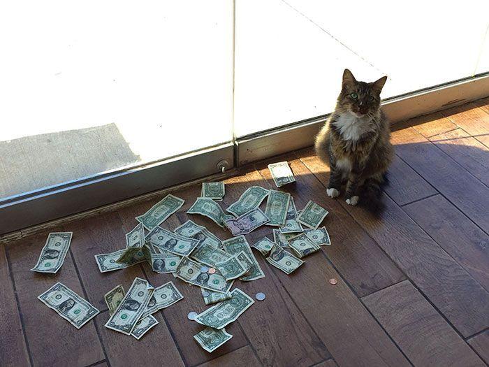 Kucing ini punya uang lebih banyak loh dari kamu. Istimewa/Berodpanda