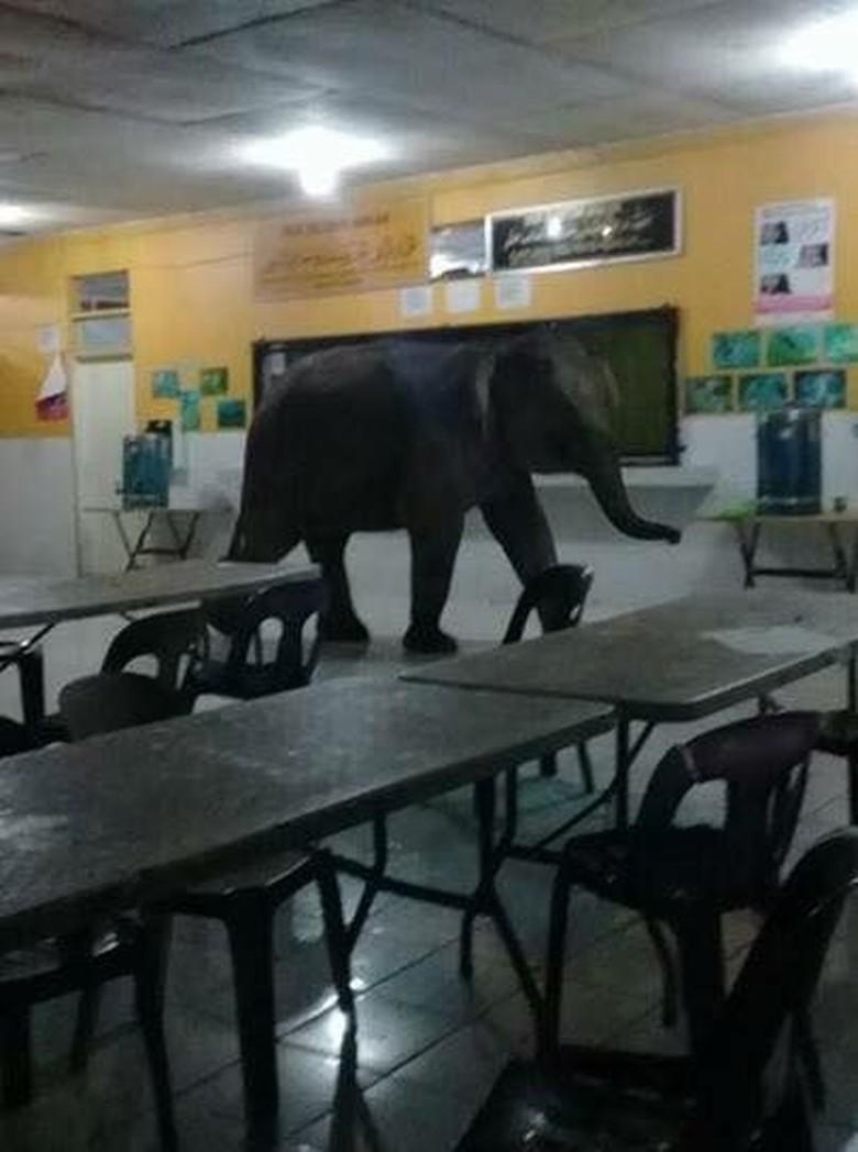 Bagai Jumanji! Saat Gajah, Babi Hutan, dan Sapi Nyelonong Masuk Kota