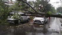 2 Mobil Tertimpa Pohon di Bandung, Polisi: Tidak Ada Korban Jiwa