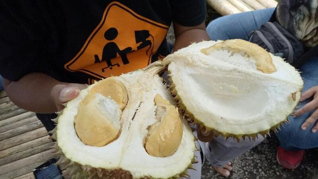 Foto: Weekend di Banyuwangi, Bisa Makan Durian di Bawah Pohon