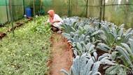 Yuk Berwisata Sambil Belajar Bertani di Kampung Organik Brenjonk
