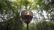 Foto: Rumah Pohon Keren di Tengah Hutan