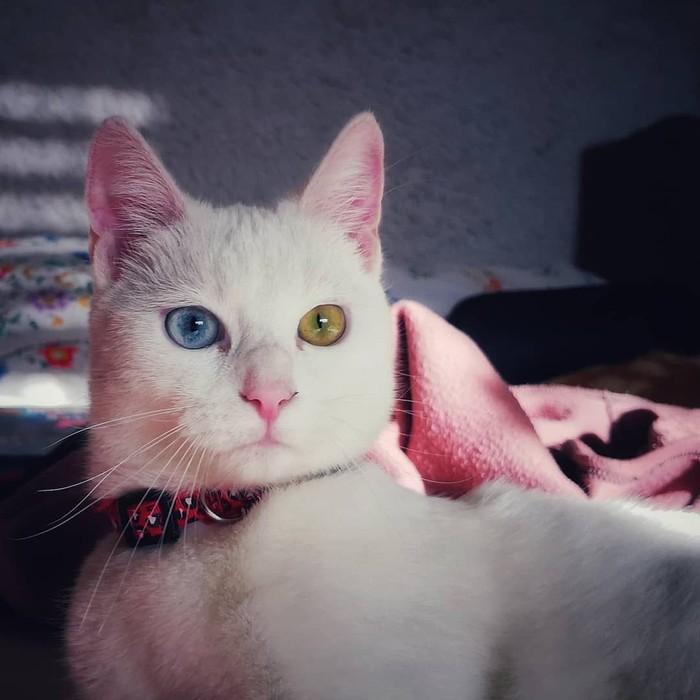 Heterochromia adalah kondisi di mana iris mata kanan berbeda warna dengan iris mata kiri. (Foto: Instagram)