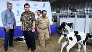 Menperin Resmikan Peternakan Sapi Perah Terbesar di Indonesia